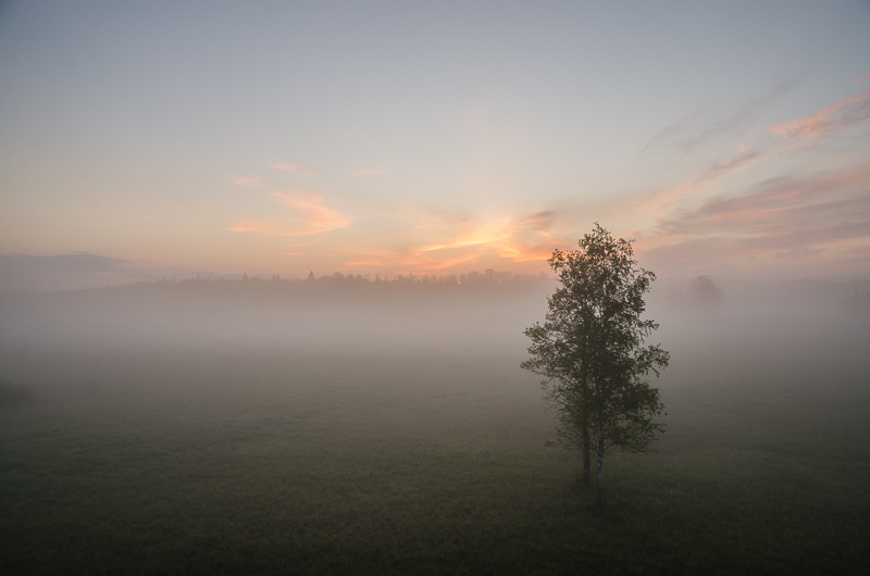 Tree in the morning fog by sinawali