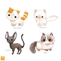 Unusual Breeds of Cat