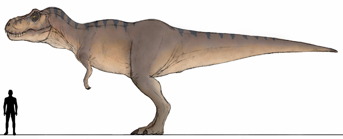 Jpdinos Jp1 Female T Rex Wip By T Joe On Deviantart