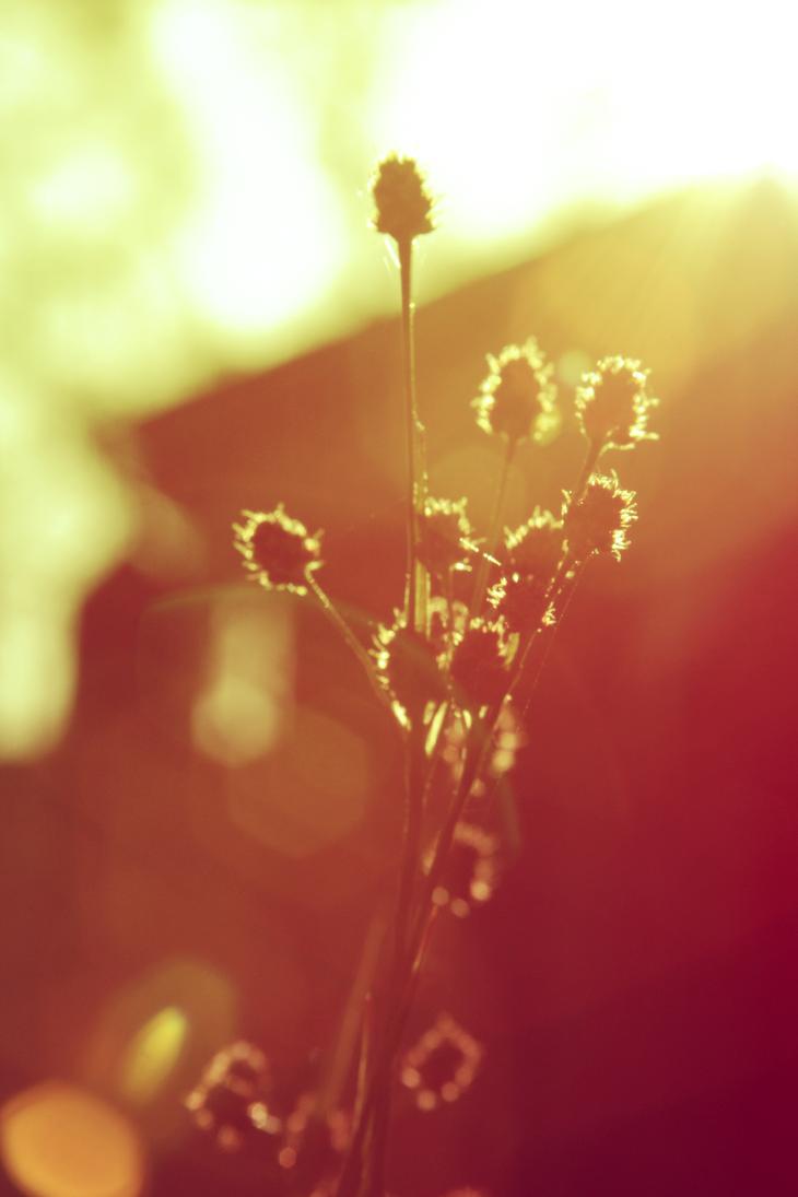 Summer Warmth by treyk4