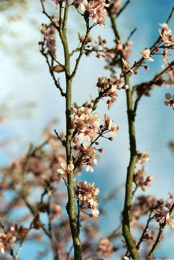 Spring 1 by chibipandora
