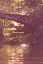Swans's bridge by Mme-Roux