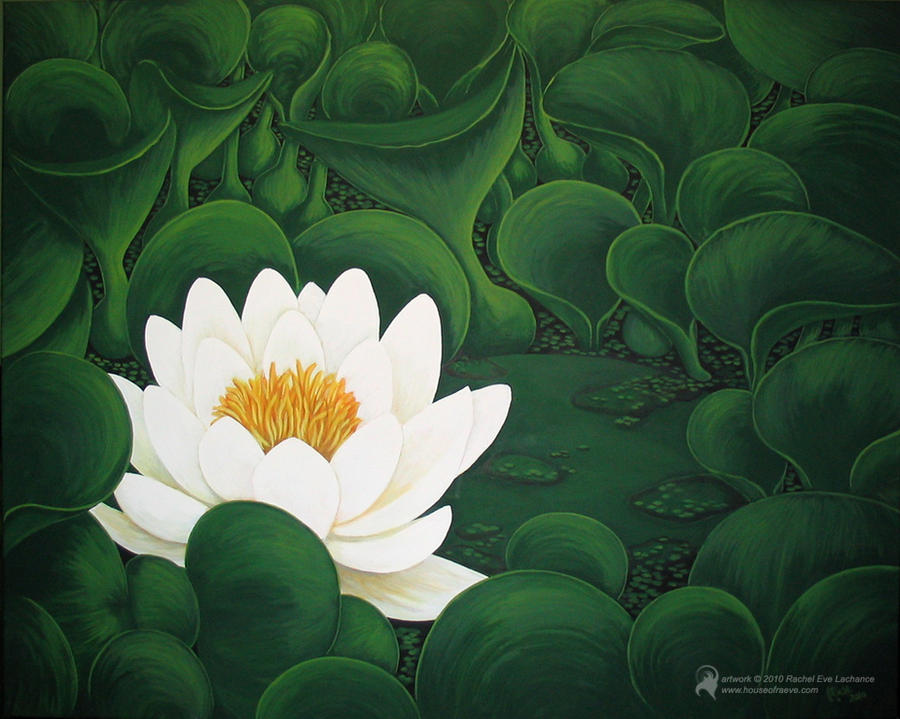Water Lily by luckyraeve