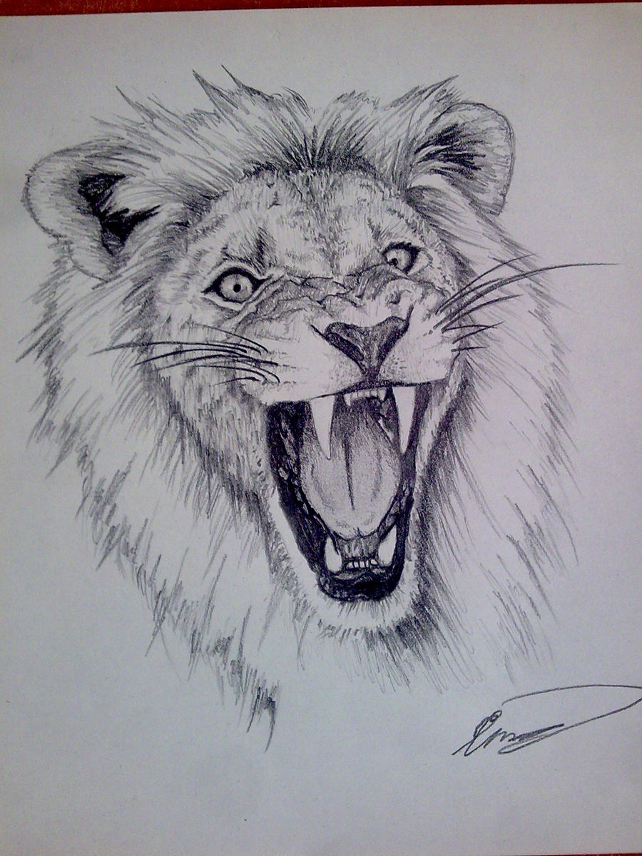 Drawings Of Lions In P...