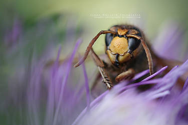 Hornet looking into your soul