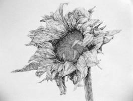sunflower by Polygraff