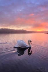 The Royal Swan by SaraJArts
