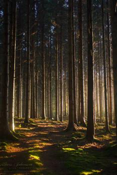 Enchanted Forest V
