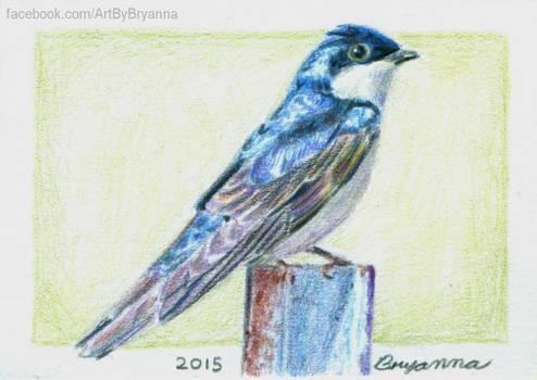 Bird ACT