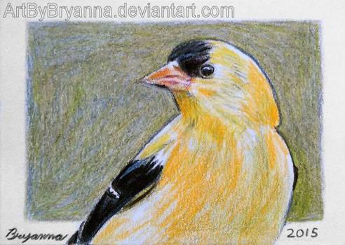 Bird ACT 2