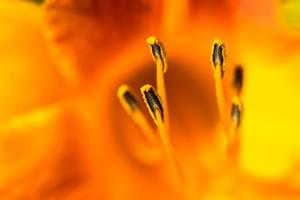 Very Orange.... by jus4taday