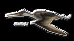 Cearadactylus by Benjee10