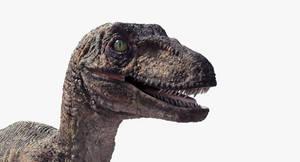 Raptor Head
