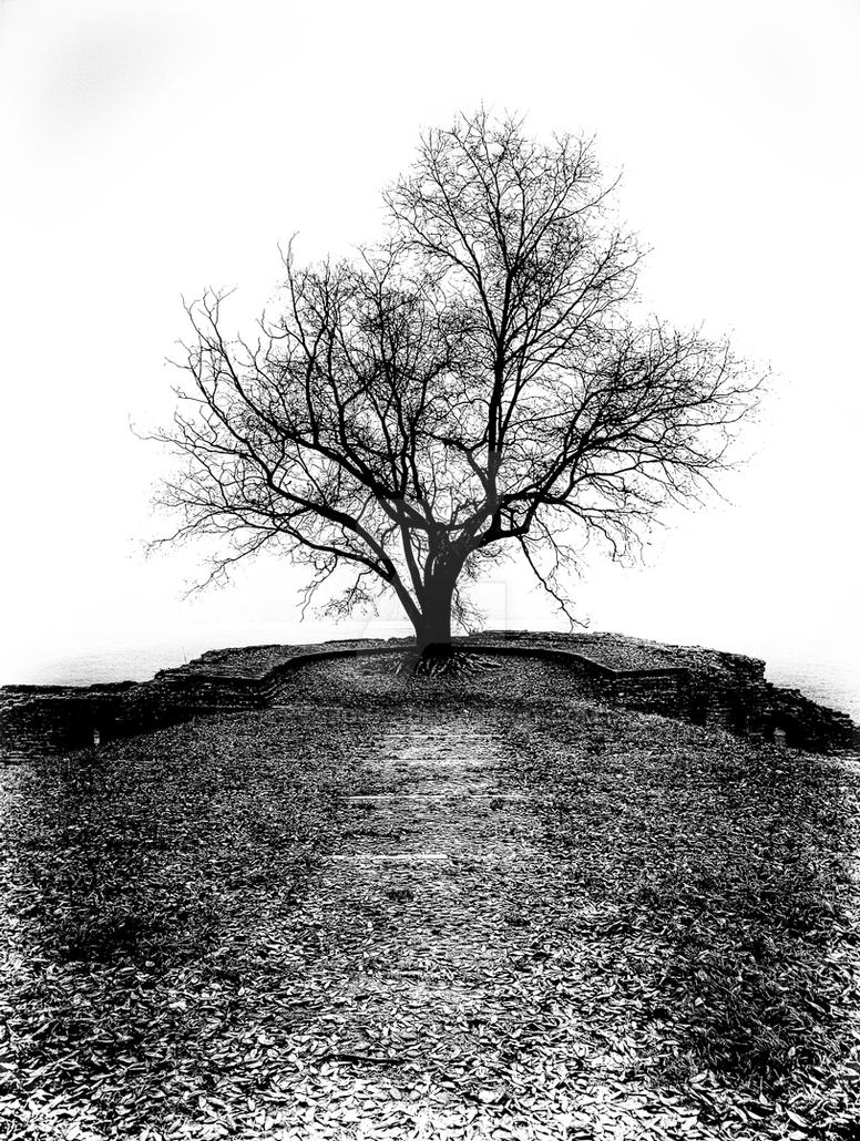 Solitude... by KillBonaz