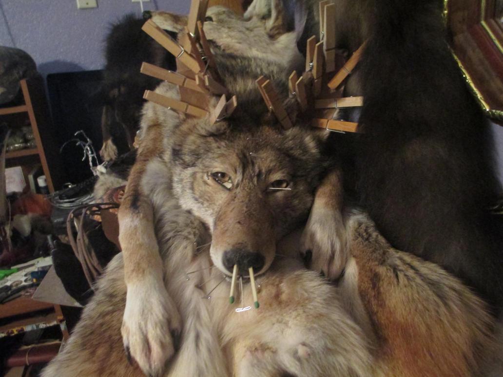 Am I Part Wolf? by NightsGem