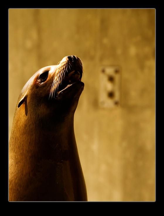 Seadog by indu-muc