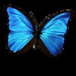 Blue Morpho PNG Vampstock