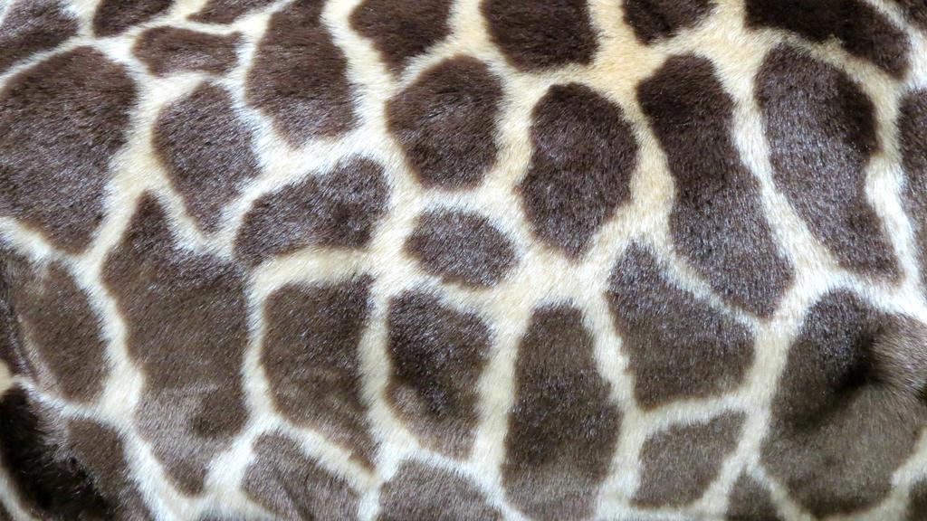 Giraffe Fur Vampstock