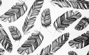 Feather Texture  Vampstock by VAMPSTOCK
