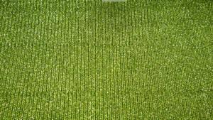 Green Glitter Texture Vampstock