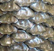 Shell Texture Vampstock by VAMPSTOCK