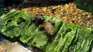 Frogs Background Vampstock