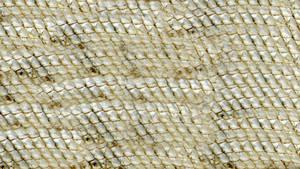 Snake Belly Texture Vampstock