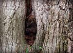 Bark 1 Texture Vampstock