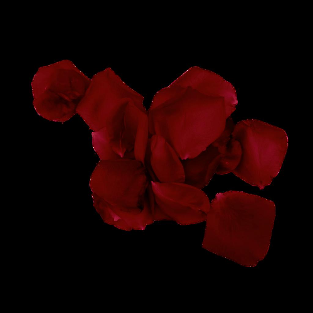 Rose Petal PNG 7 Vampstock