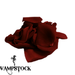 Rose Petal PNG 2 Vampstock