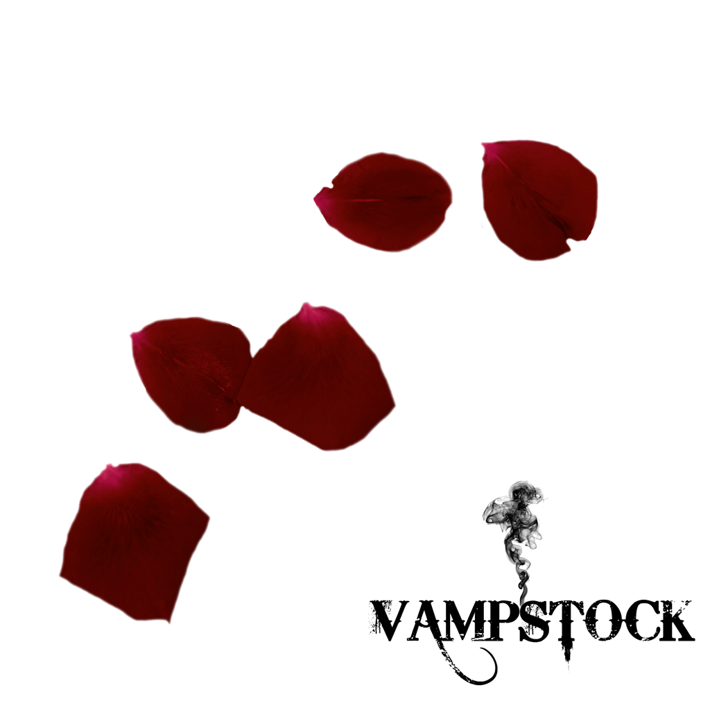 Rose Petal PNG 1 Vampstock by VAMPSTOCK