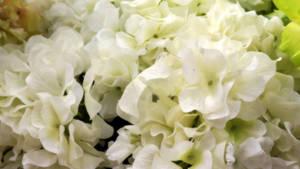 Flowers Texture Vampstock ap by VAMPSTOCK