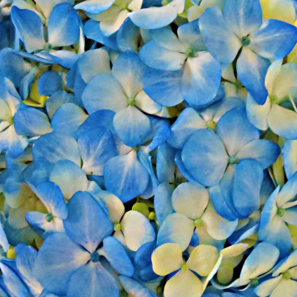 Flower Texture 22 Vampstock