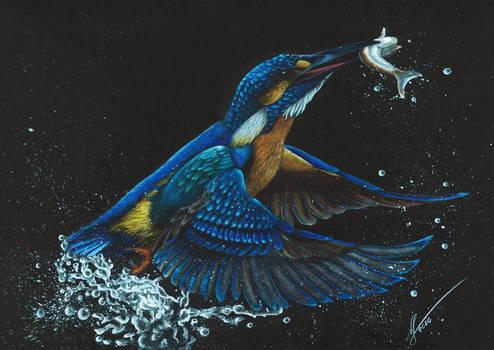 Beautiful Wildlife: Kingfisher