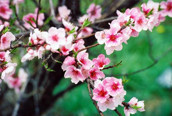 Pink flower tree by neadysamurai on deviantart pink flower tree by neadysamurai mightylinksfo Gallery