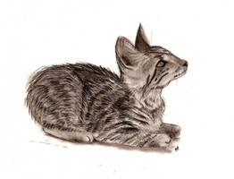 Kitten by Itti