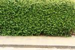 Stock: Hedge