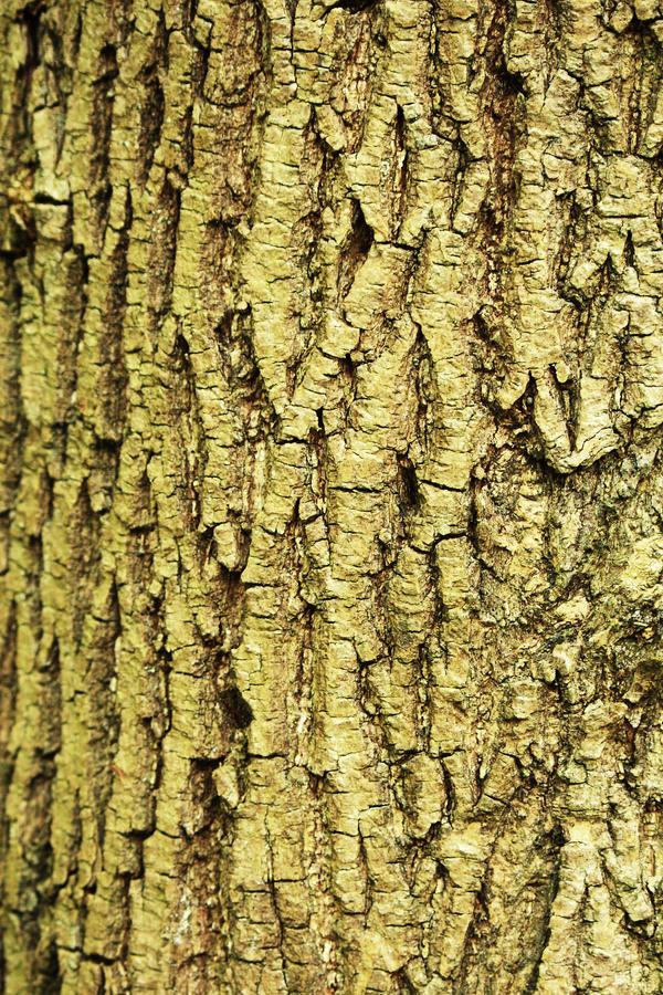 Texture: Bark