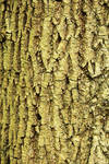 Texture: Bark by Itti
