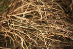 Texture: Twigs