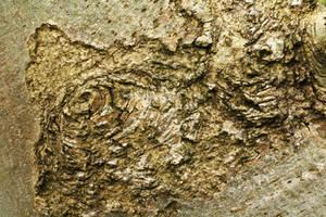 Texture: Knobbly Bark by Itti