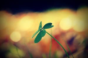Lucky Dew by xFlowerCatx