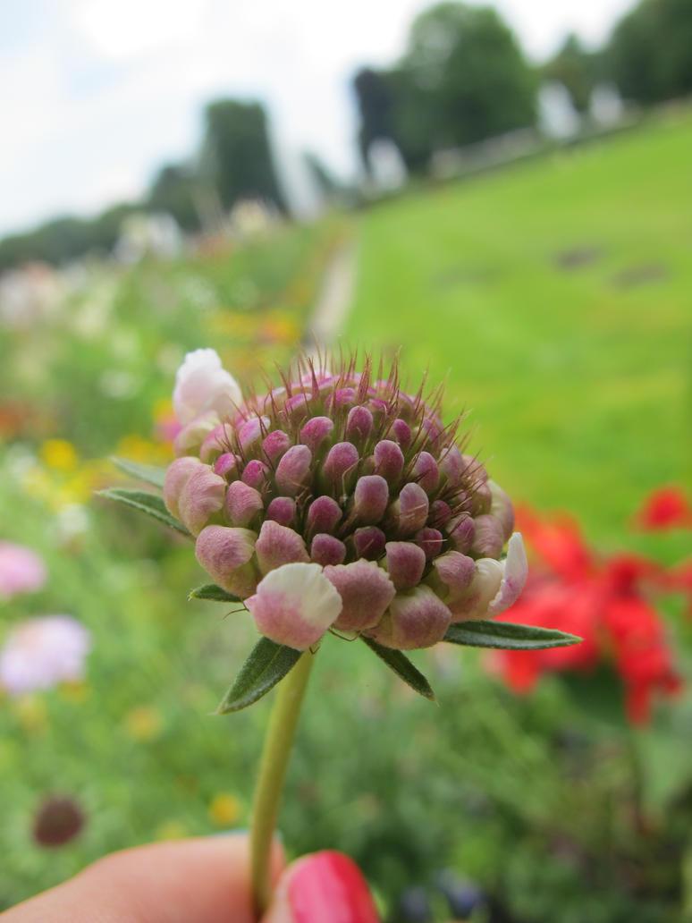 Spiky Plant by Saltychocolate101