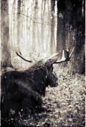 retreat into inwardness... by Cryel