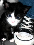 the kitten and its shoe