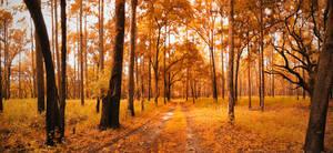 Golden Forests