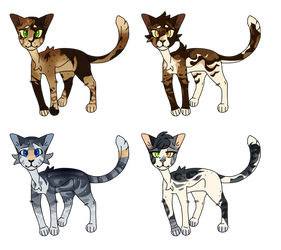 Cat Adopts 3 | (1/4) by XRhymee