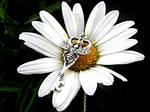 Honey Bee Skeleton Key Necklace