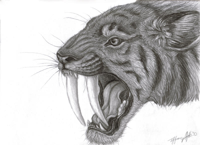 Smilodon by LUNAtic-36