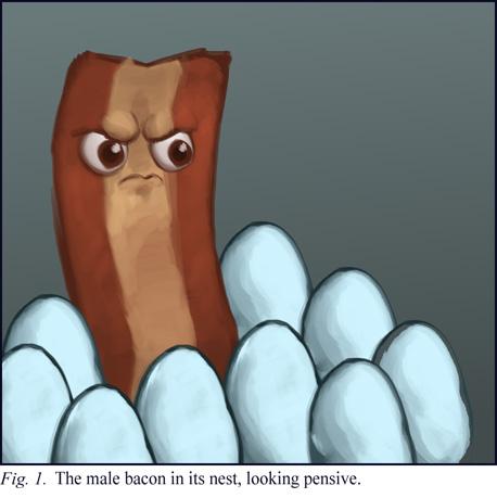 A Male Bacon